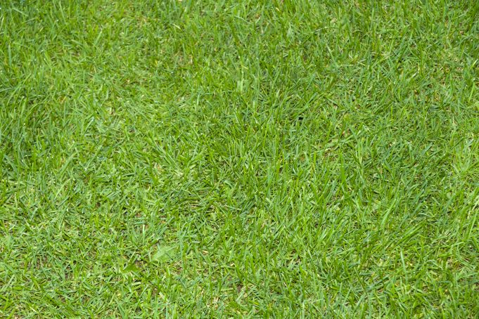 Full Frame Green Grass Texture