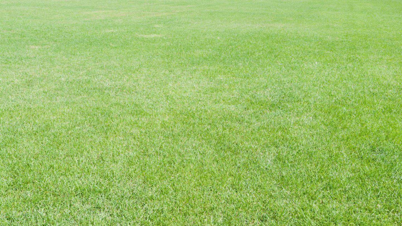 Full frame green grass lawn