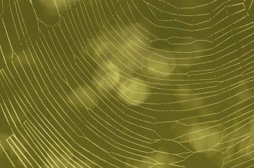 Fullscreen Wet Spider Web Silk on Green