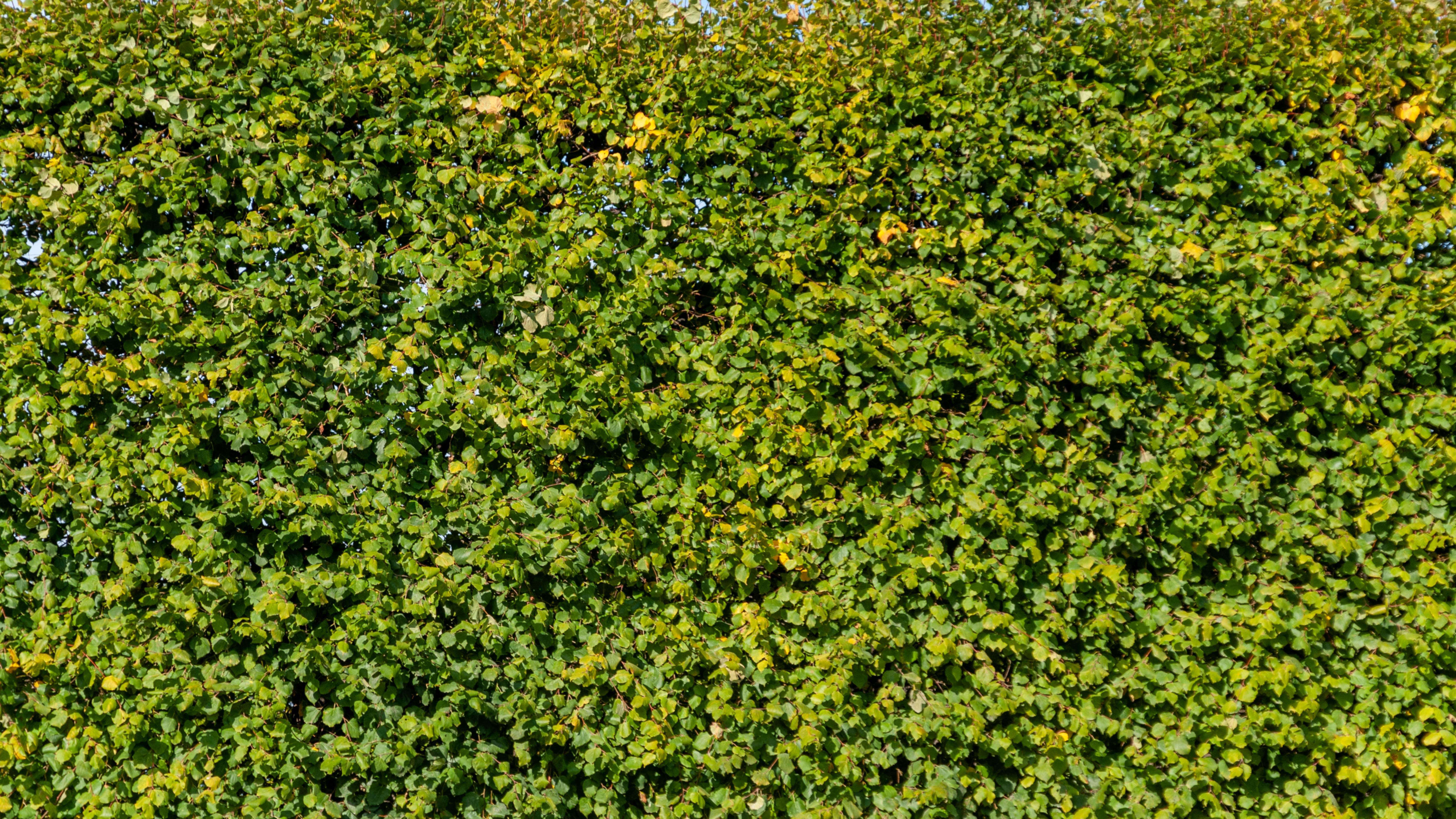 Garden bush background wall
