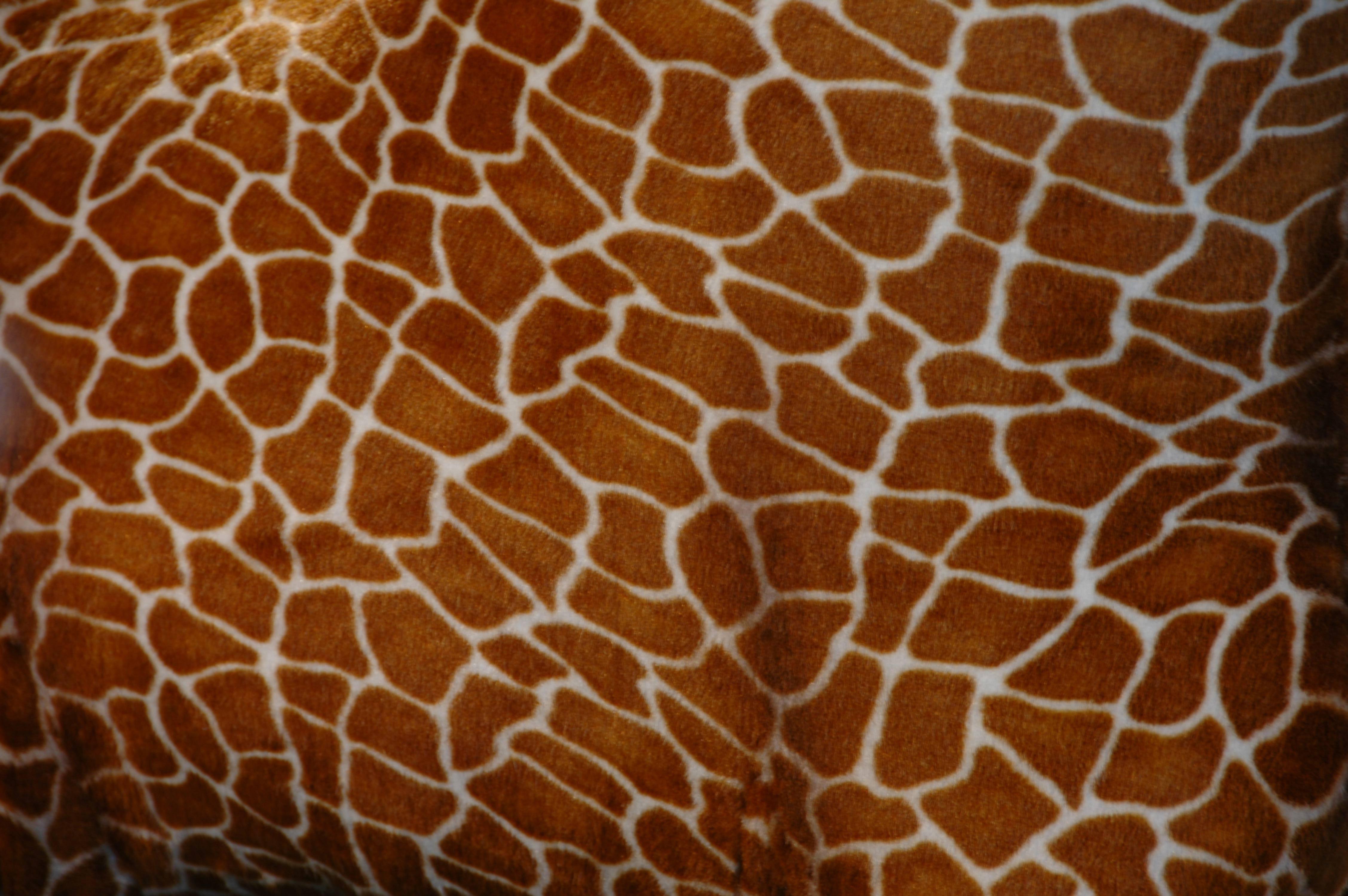 Giraffe Toy Skin Texture