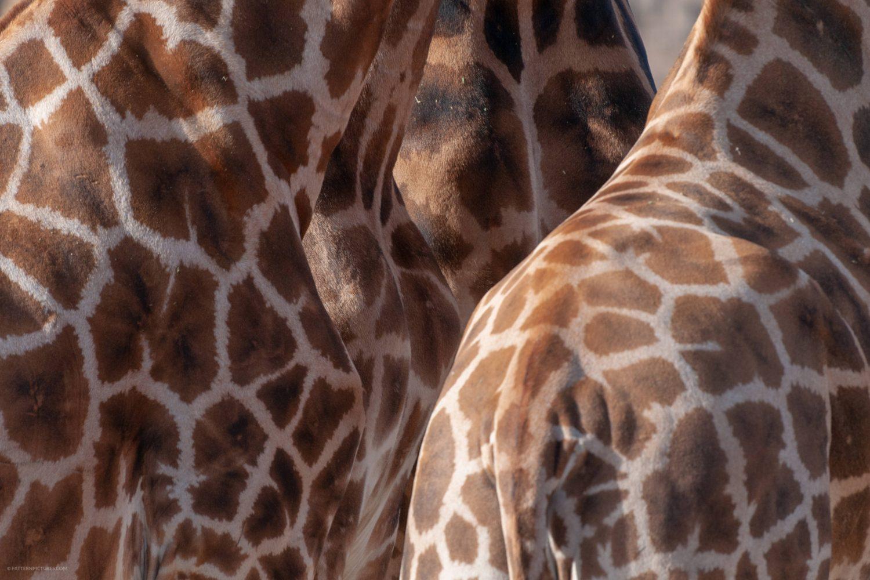 Giraffe skin full frame free photo