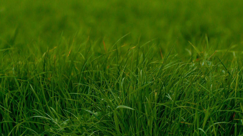 Grass gradient green background