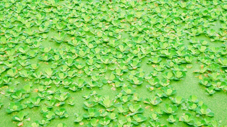 Green Algae Water Texture