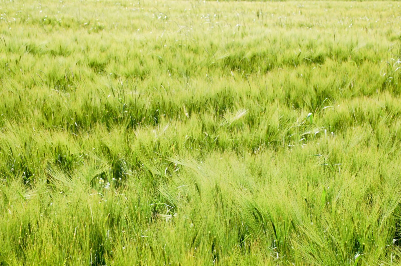 Green Field Abstract Blurred Background
