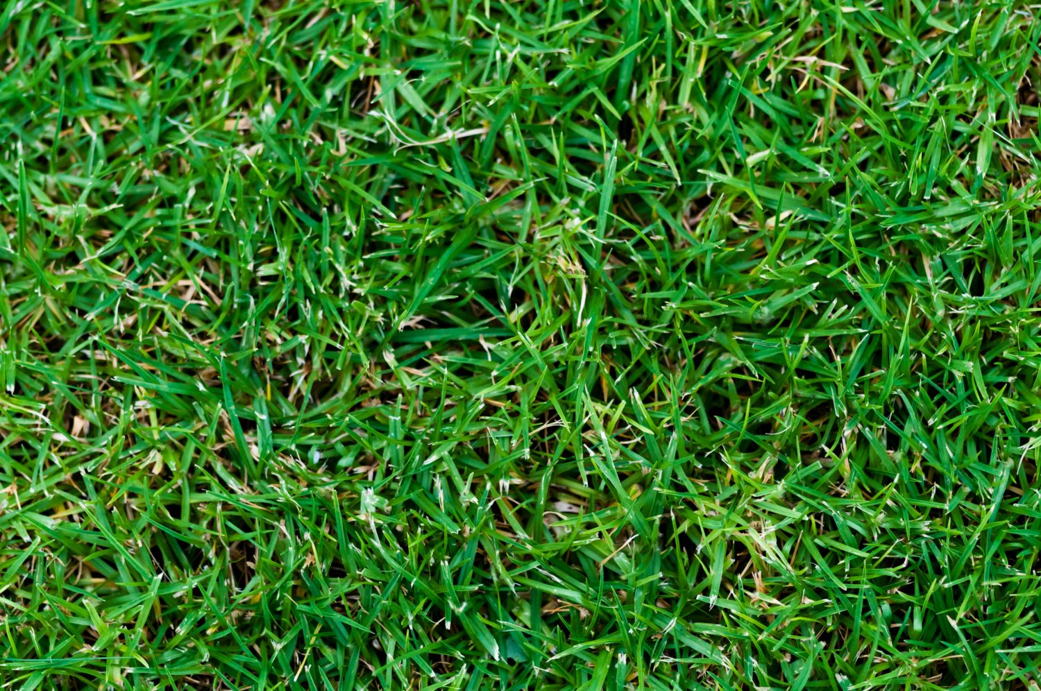 Green Grass Strong Leaves Texture