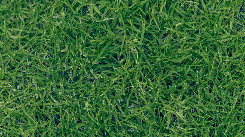 Strong grass texture background