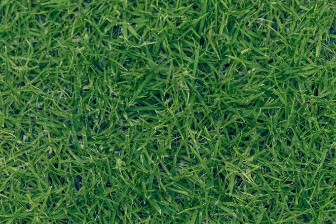 Strong grass texture background