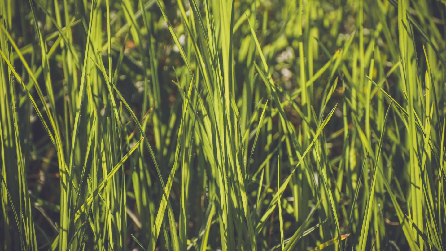 Green large grass background