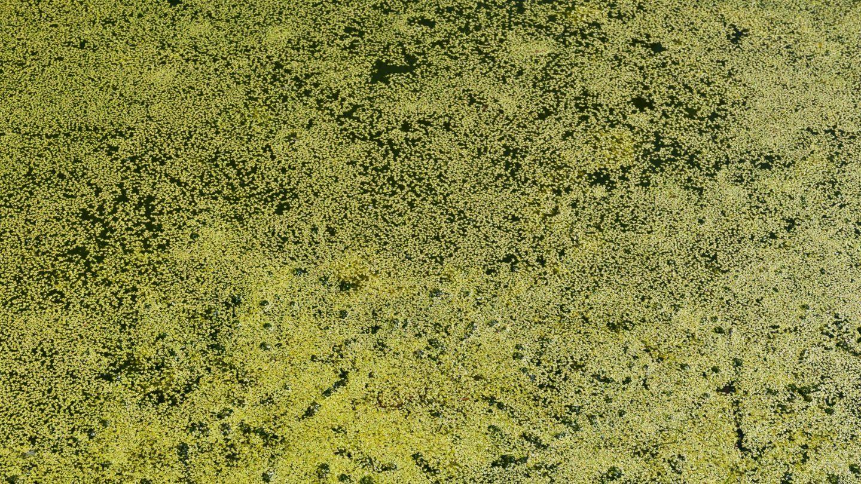 Green Water Algae Texture