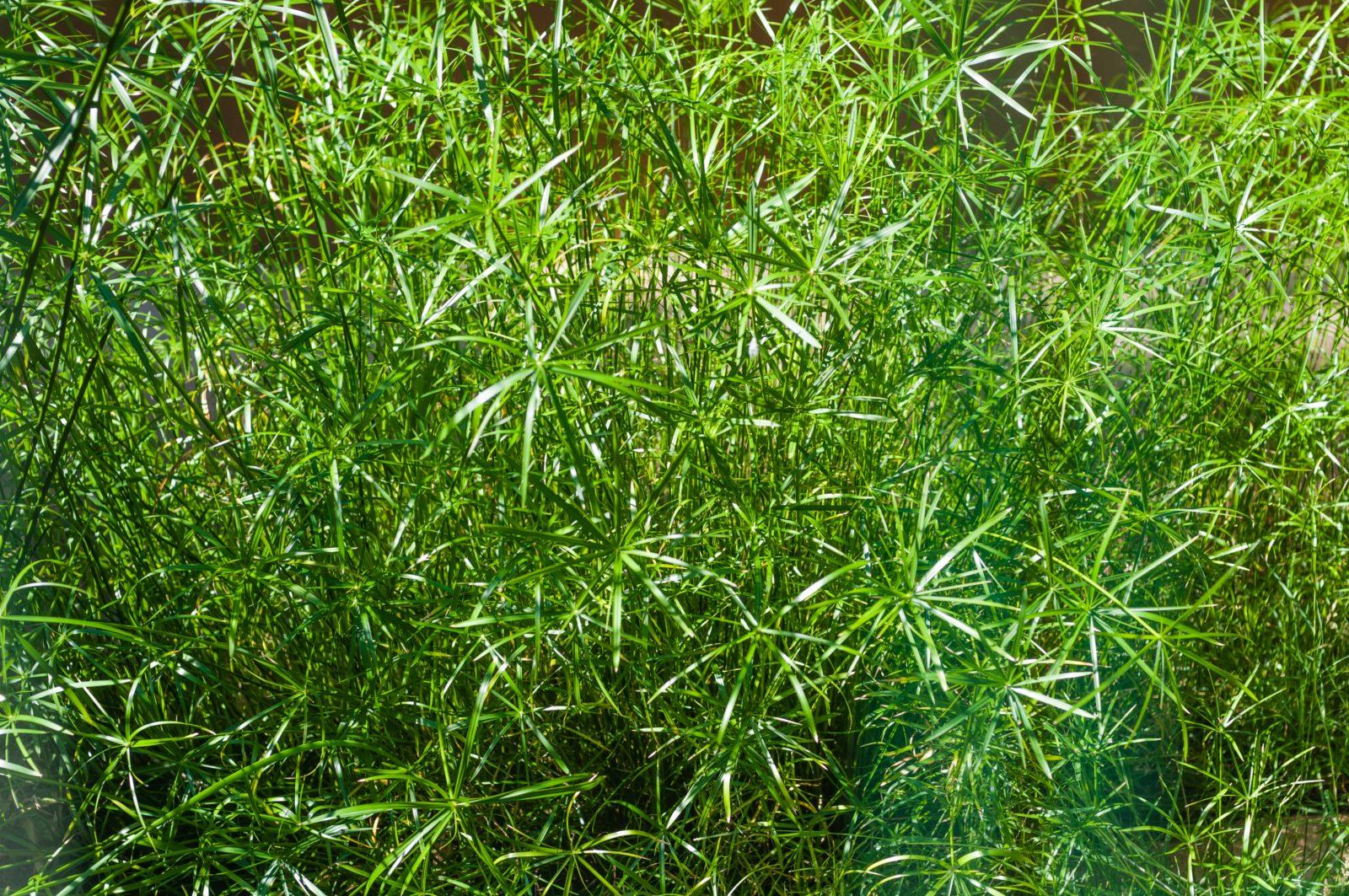 Green bush nature green background