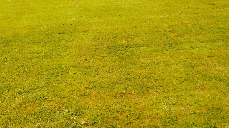 Green grass texture warm background
