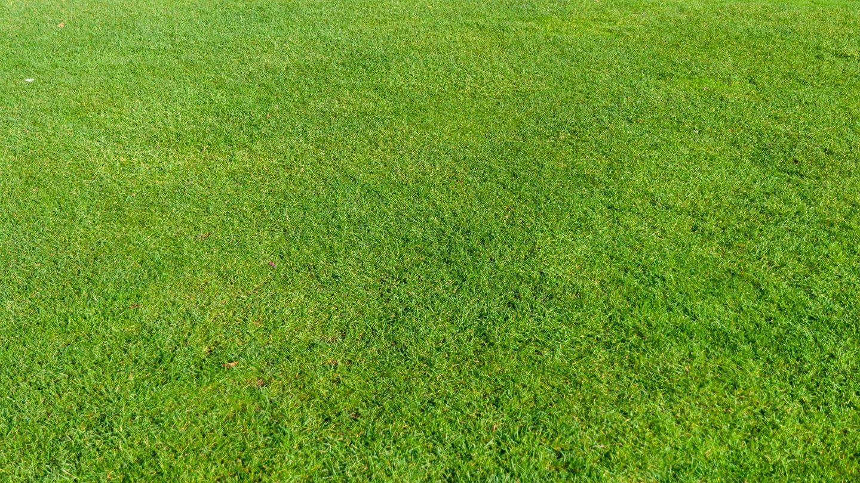 Green lawn grass field background photo