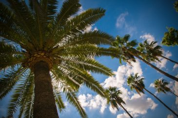 Green palm tree leafs blue sky white clouds