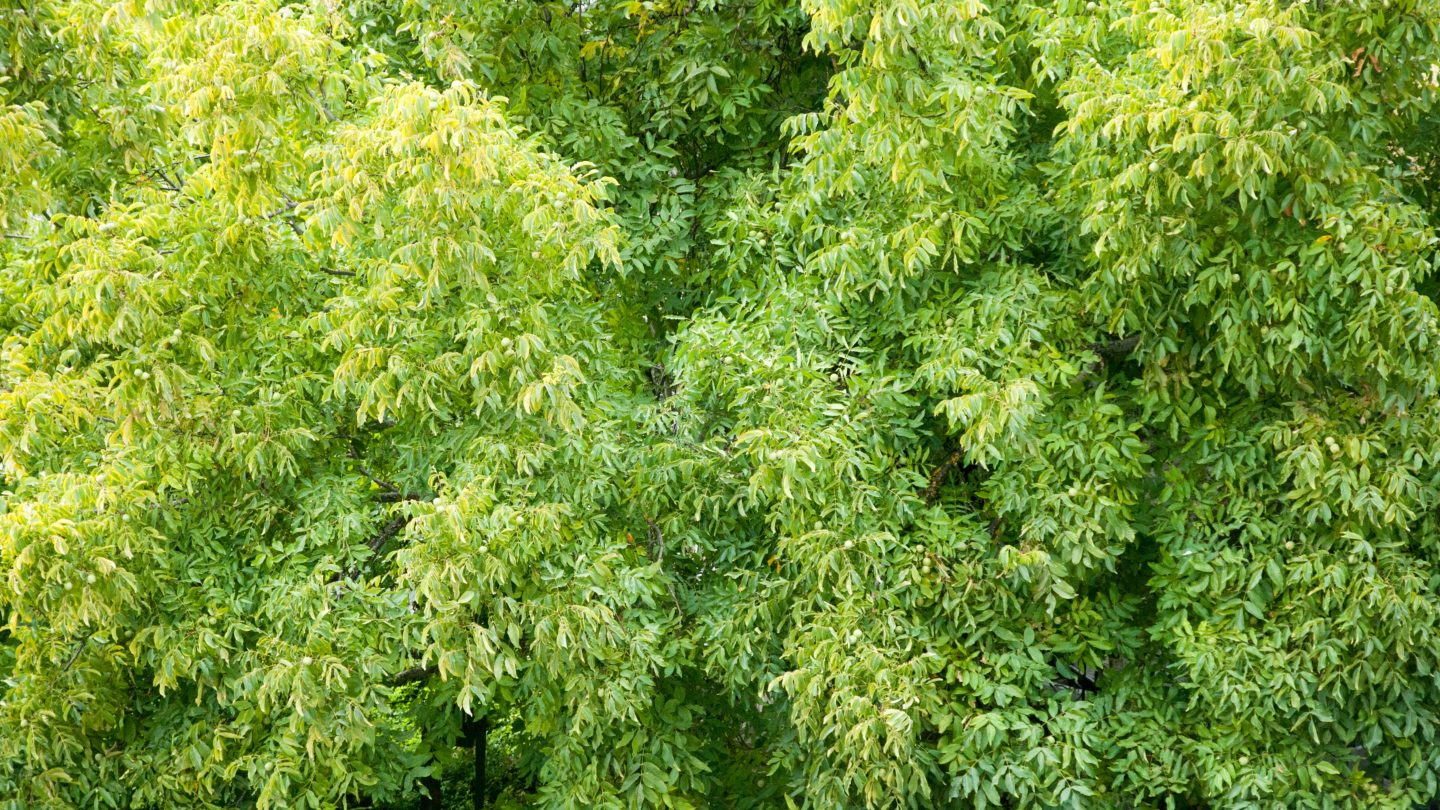Green trees aerial view of forest texture