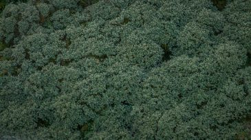 Green trees seen from above