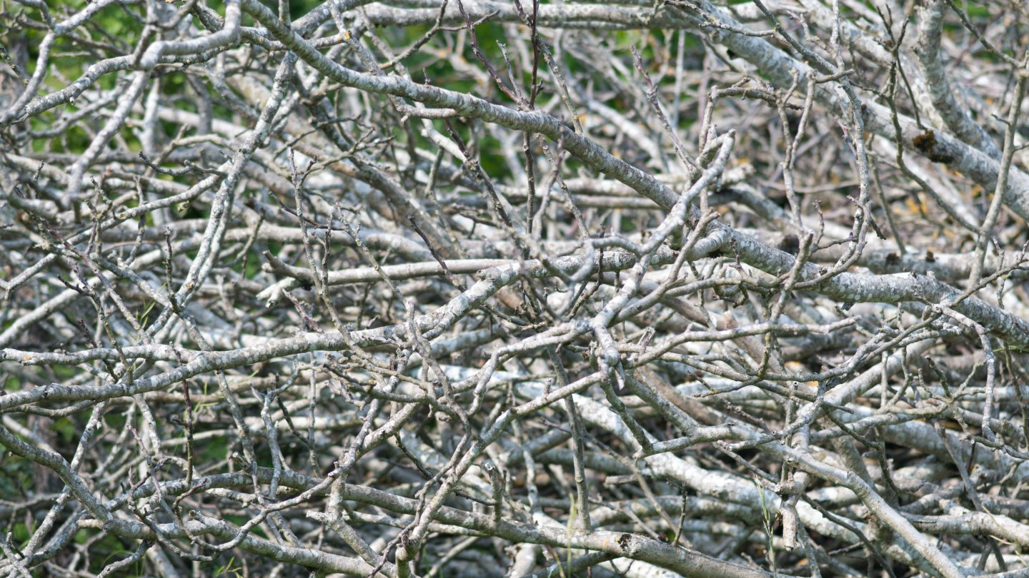 Grey branches texture