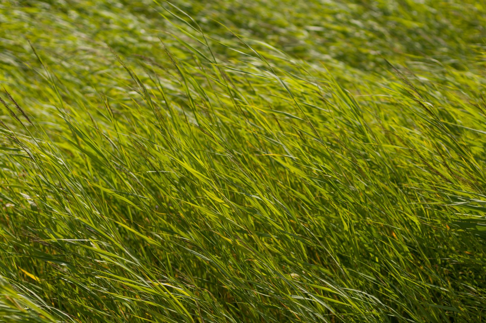 High dark green grass background texture