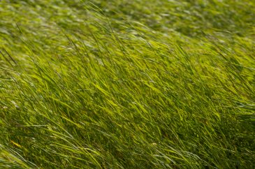 High dark green grass background texture