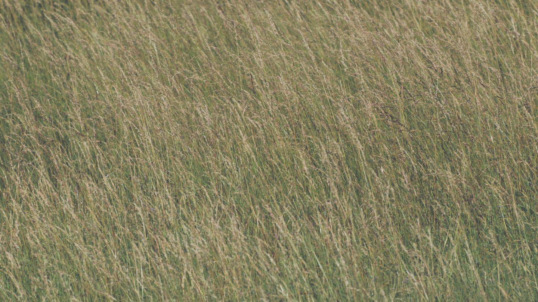 High grass texture background