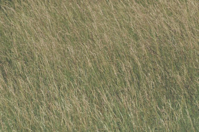 High grass texture background