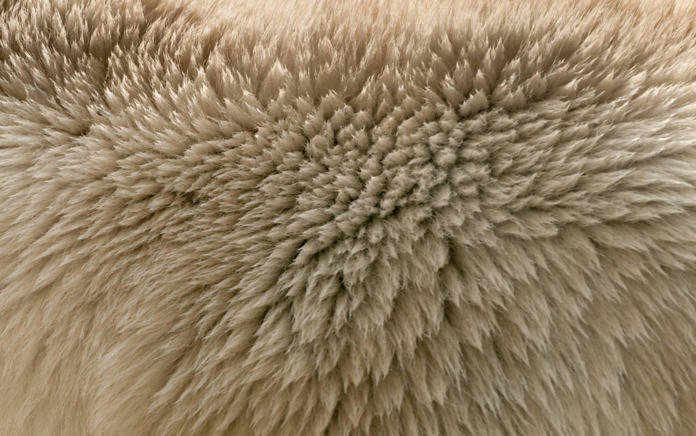 Ice bear fur texture