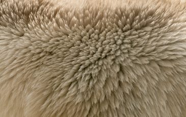 Ice bear fur texture
