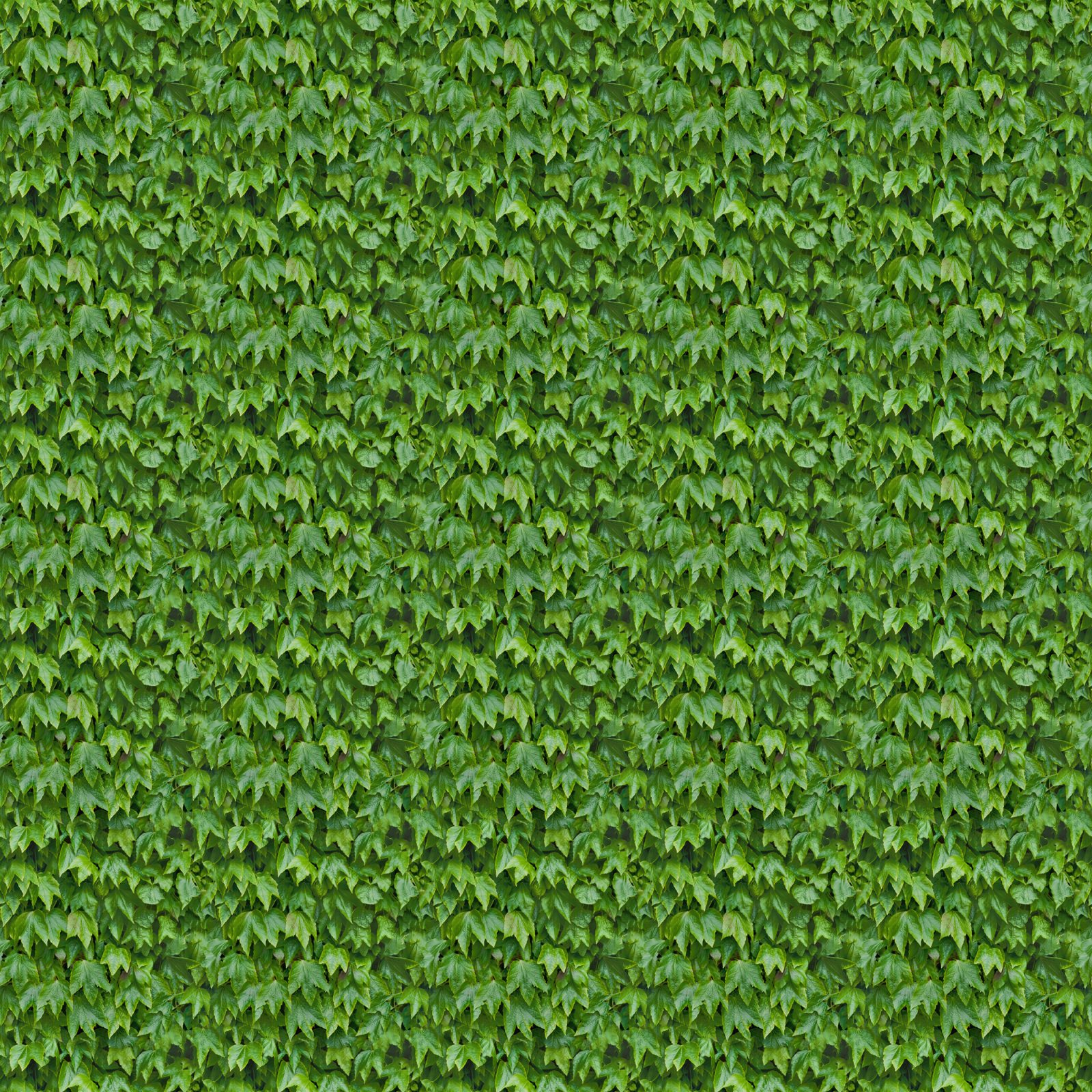 Ivy Leaves Seamless Texture Background