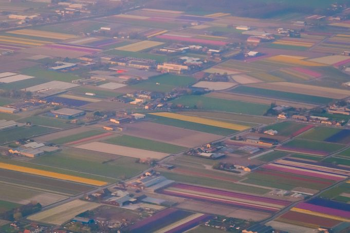 Landscape Netherlands airphoto flowerfields