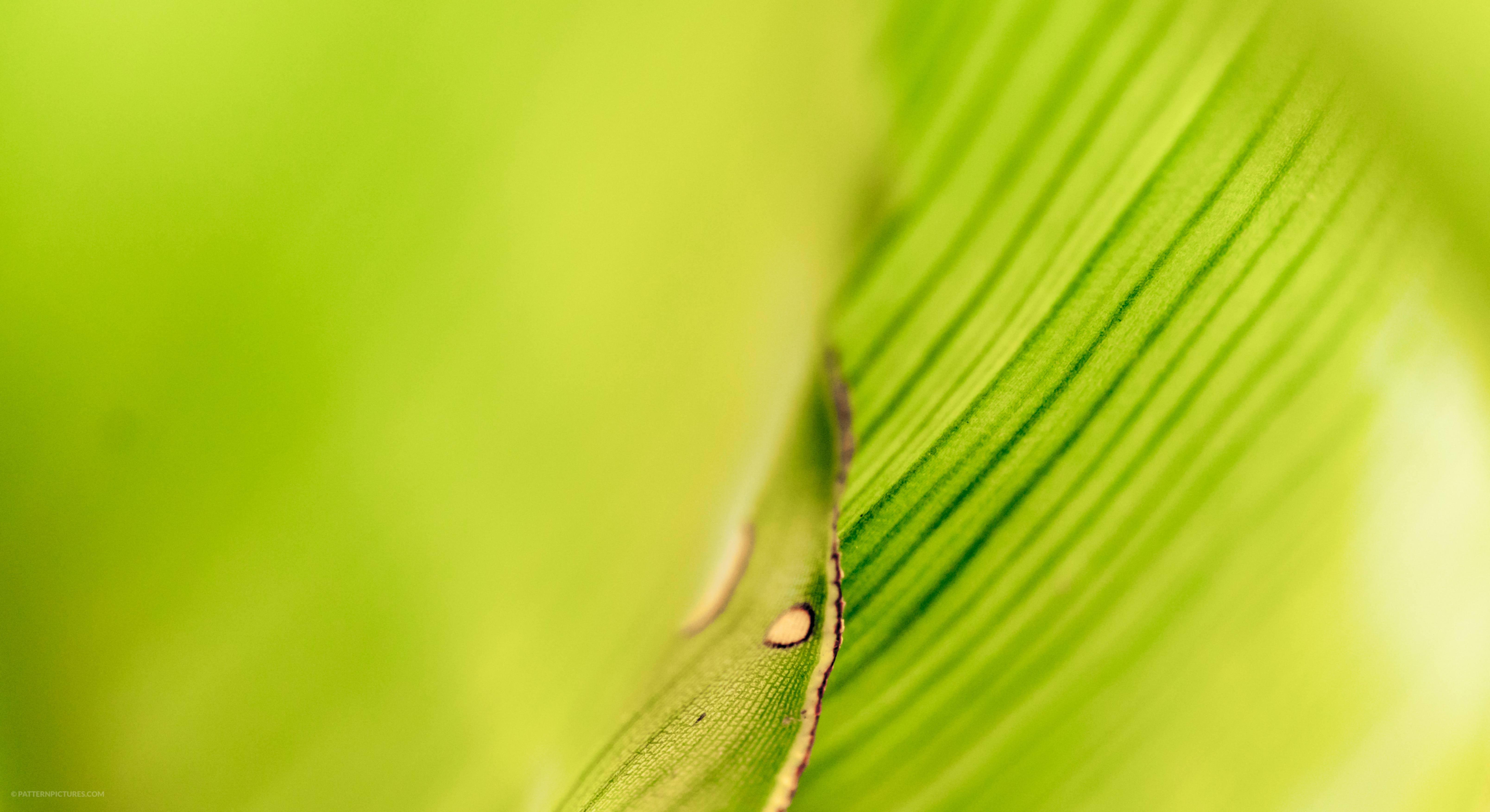Leaf close-up bokeh background