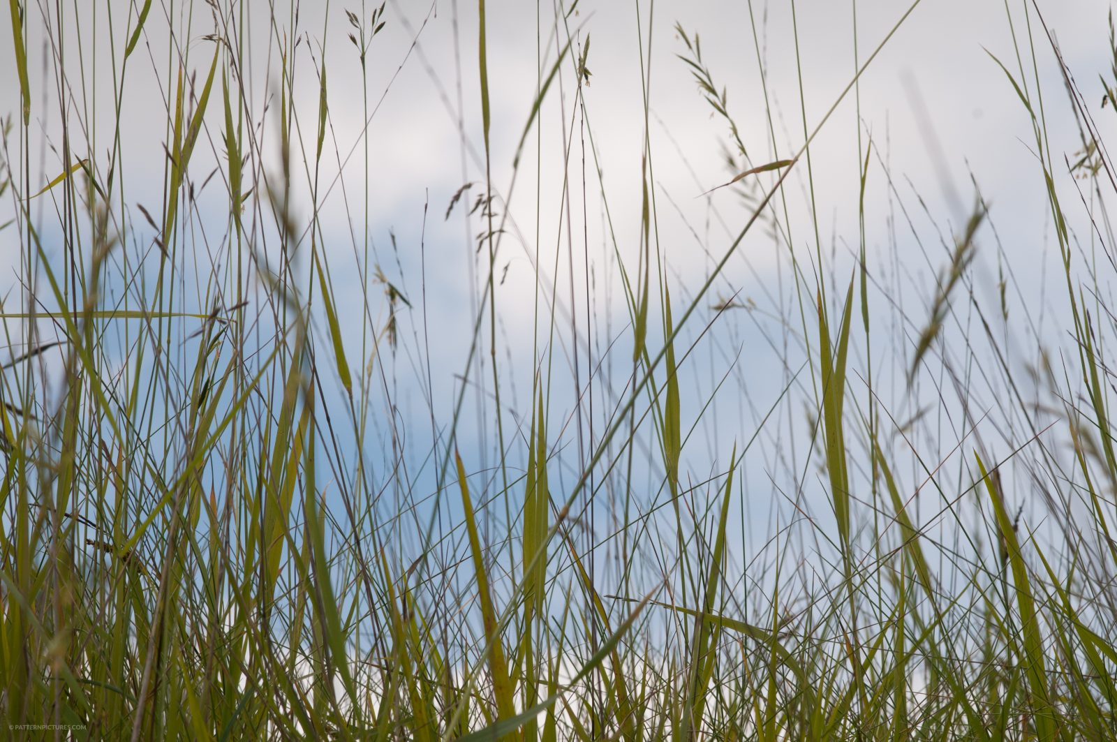 Low in the high grass sky view photo