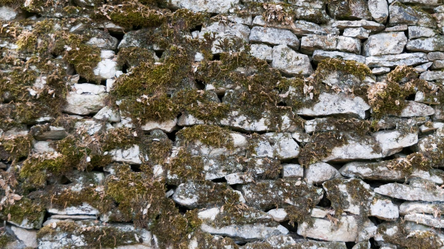 Moss covered old white wall
