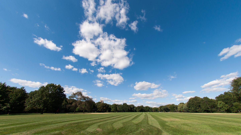 NY Central Park blue sky treeline and grass