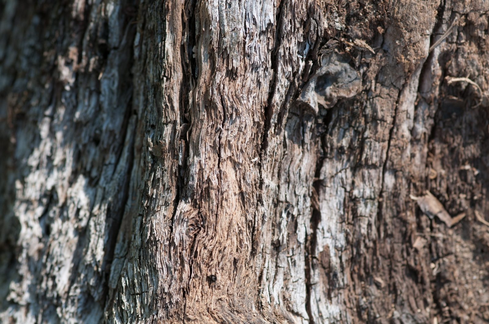 Old wood tree branch small focus