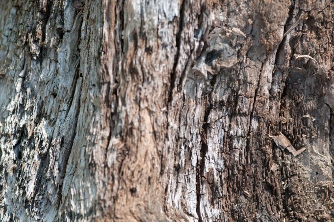 old wood tree trunk texture