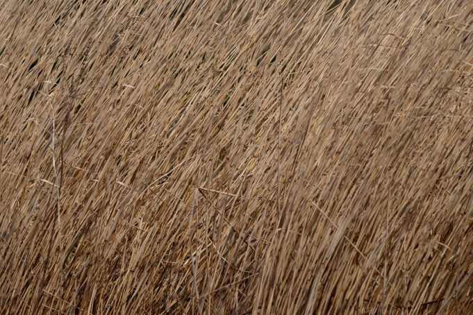 Reeds Along Water background
