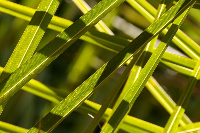 Palmtree Leaves Texture Pattern