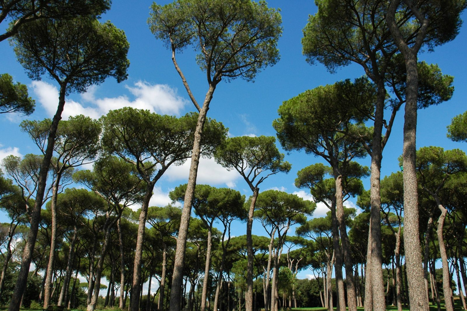 Taking a relaxing walk in Romes Gianicolo Park