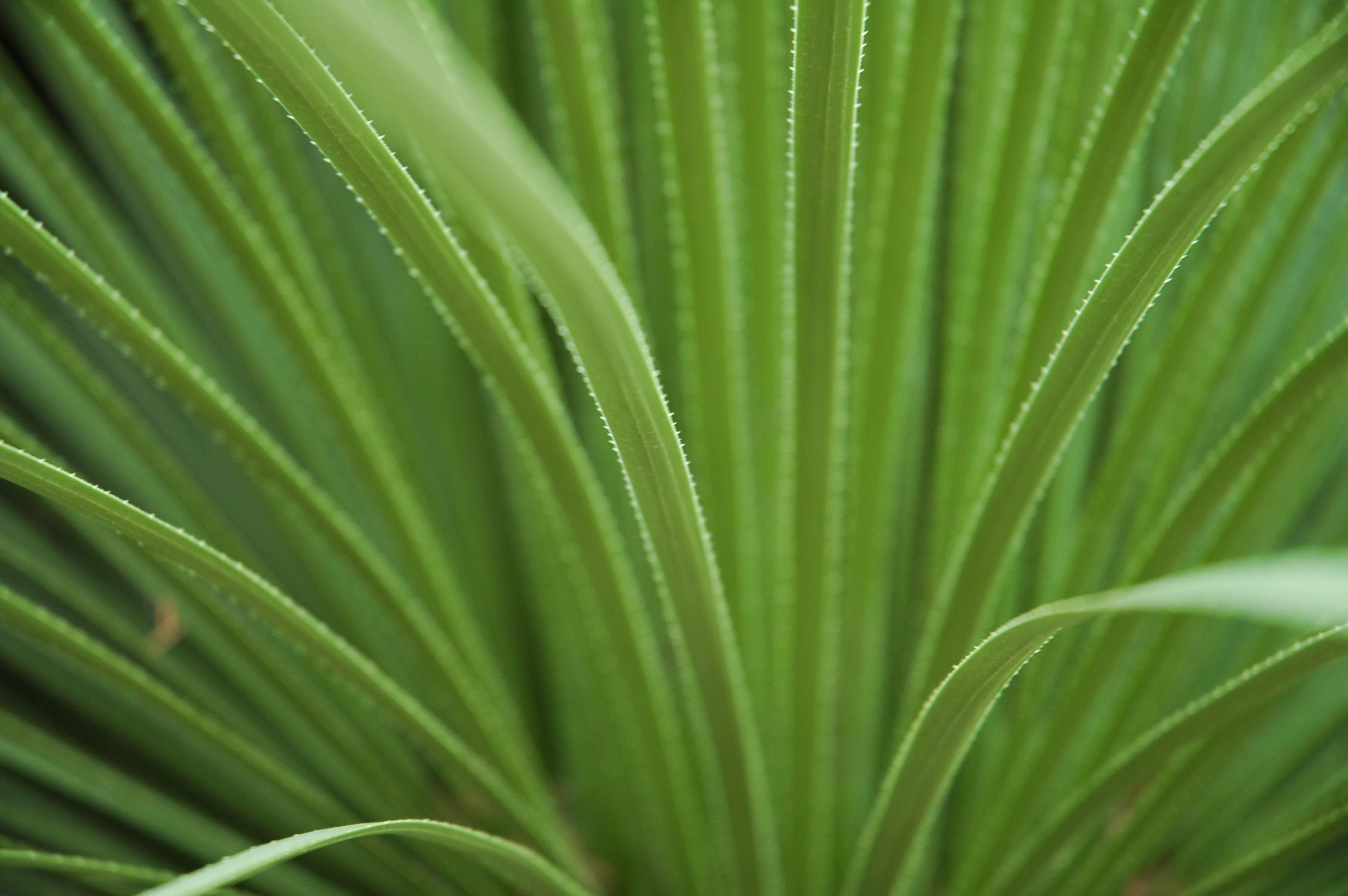 Botanic Garden Cactus Leaves Texture