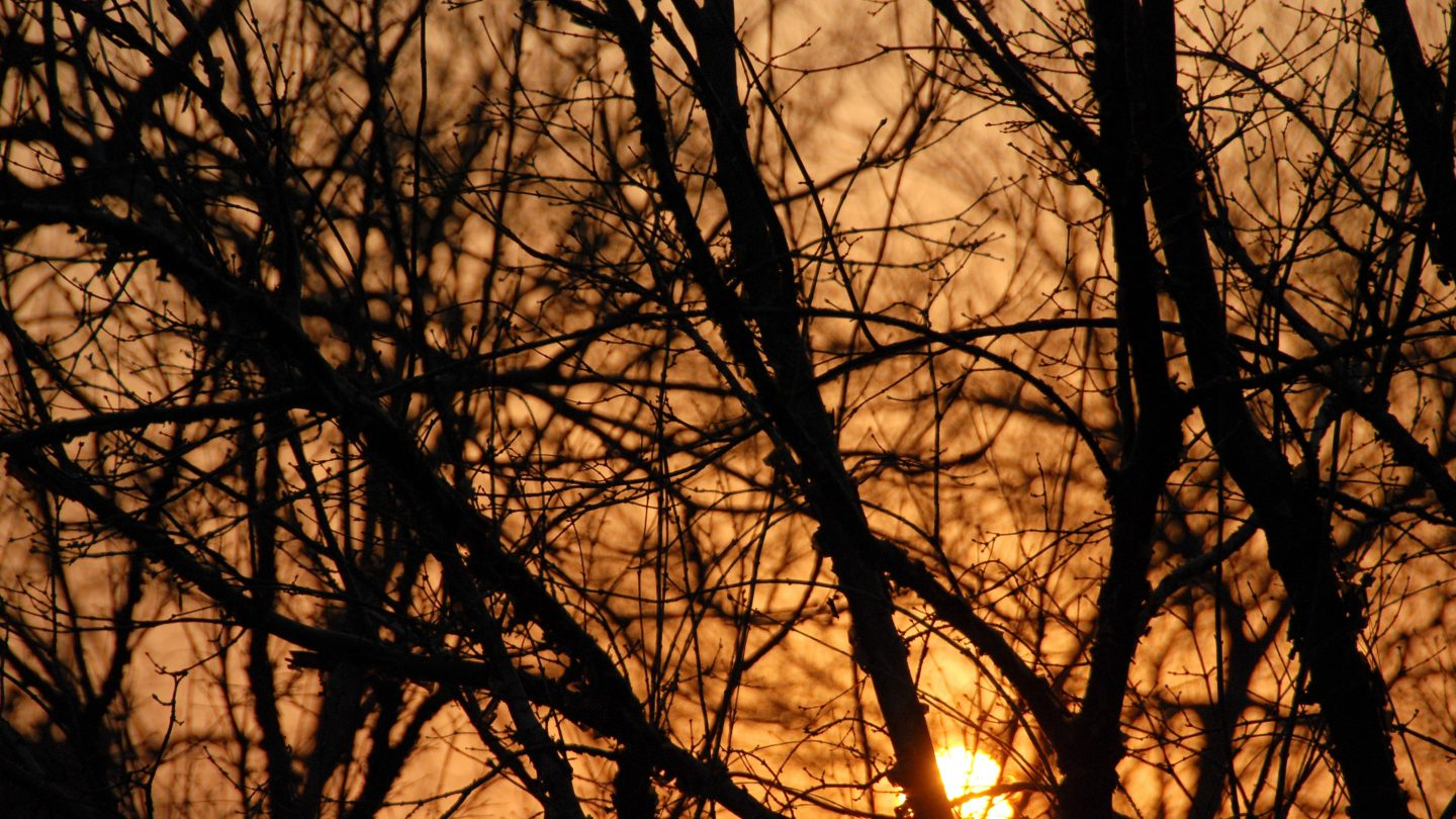Chinese Trees Evening Sunset