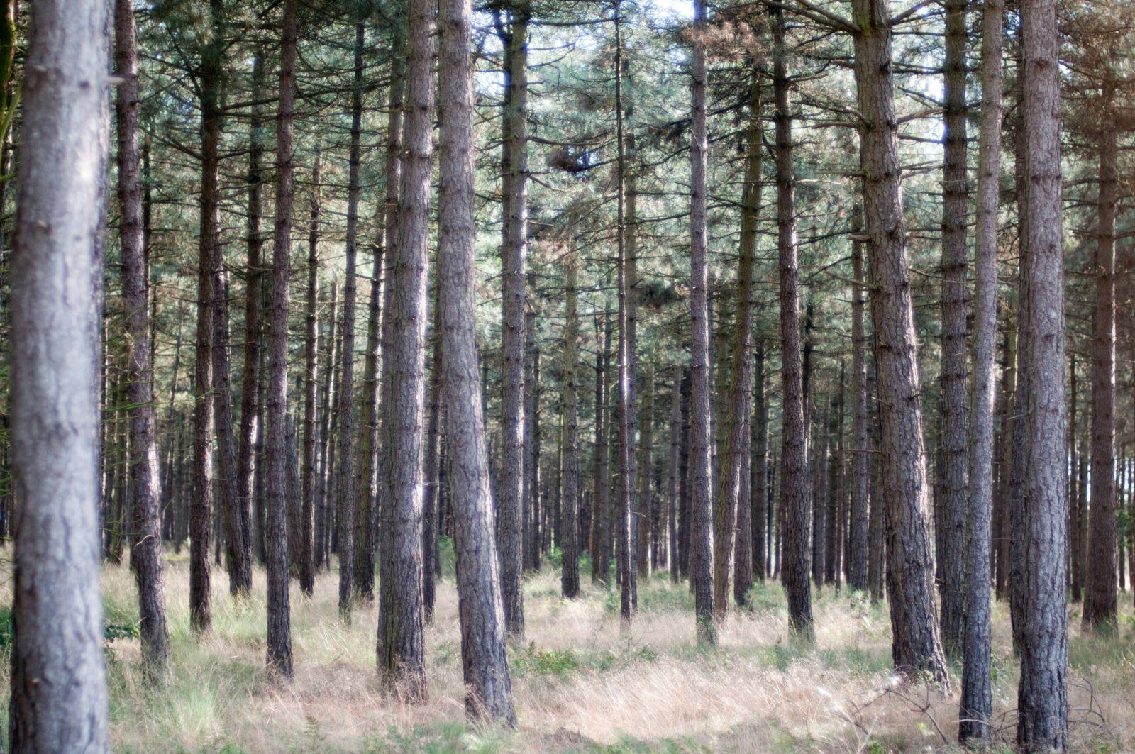 Forrest Tree Trunks Pattern