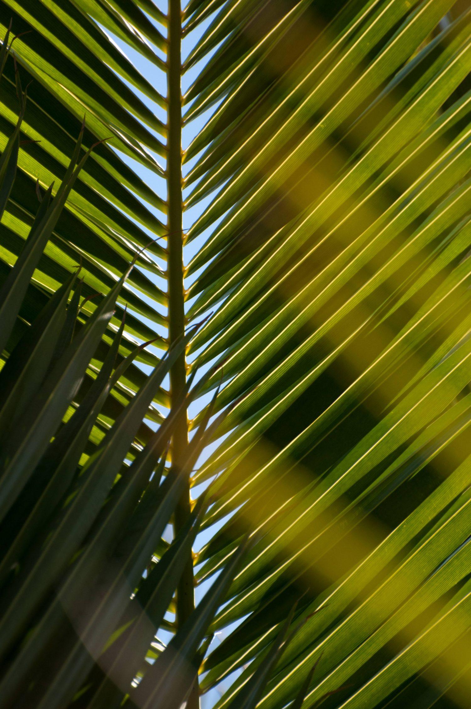 Palmtree Leaves