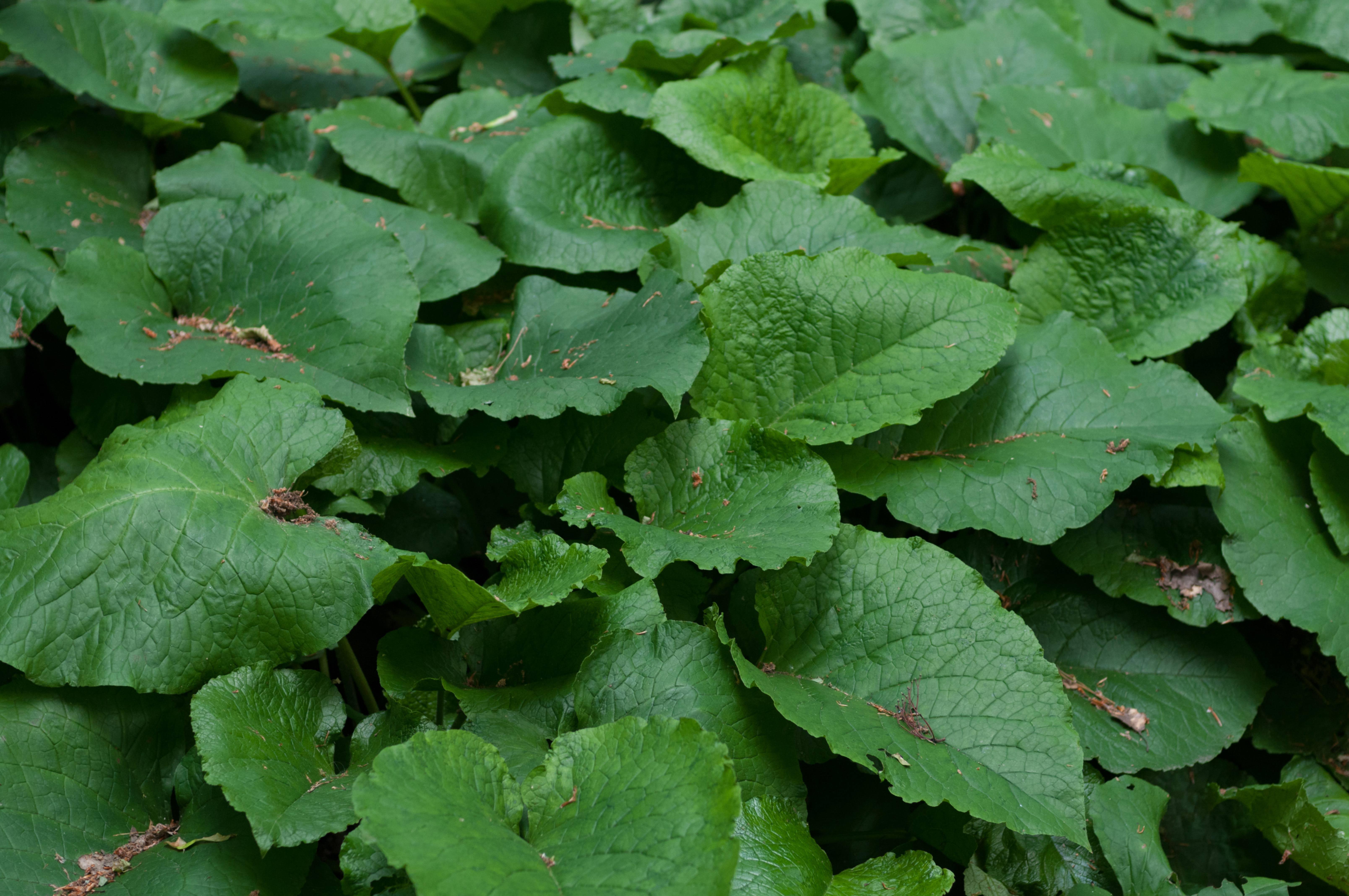 Big green leafs pattern
