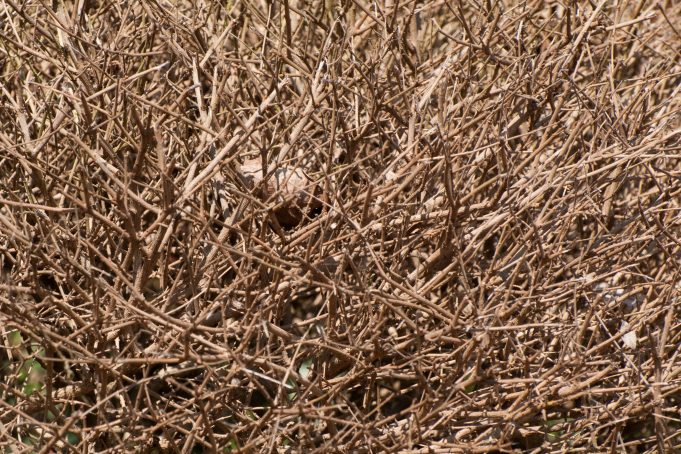 Bush Branches