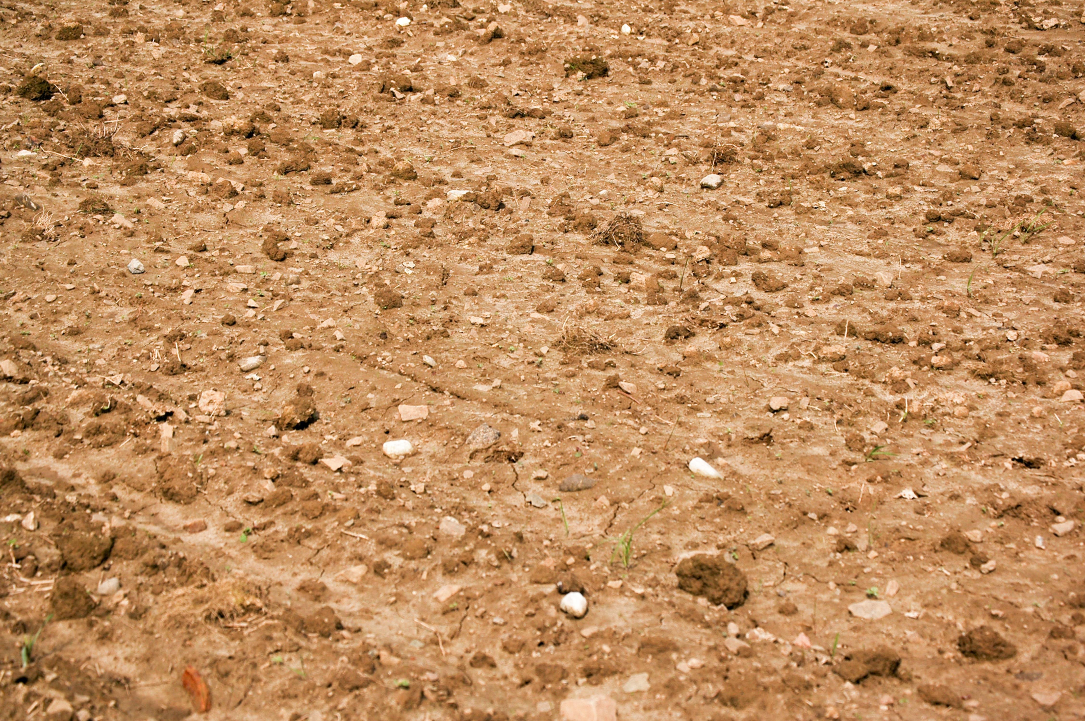 Brown Dry Dirt