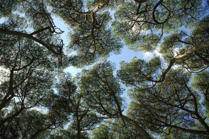 Roman Park Treetops