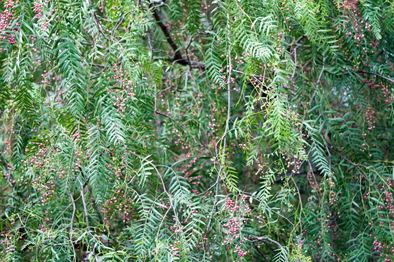 Red Berries Tree