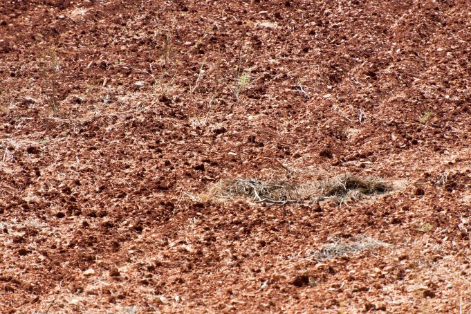 Earth dirt background
