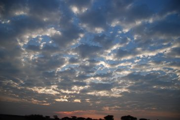 Serengeti wildpark sky panorama