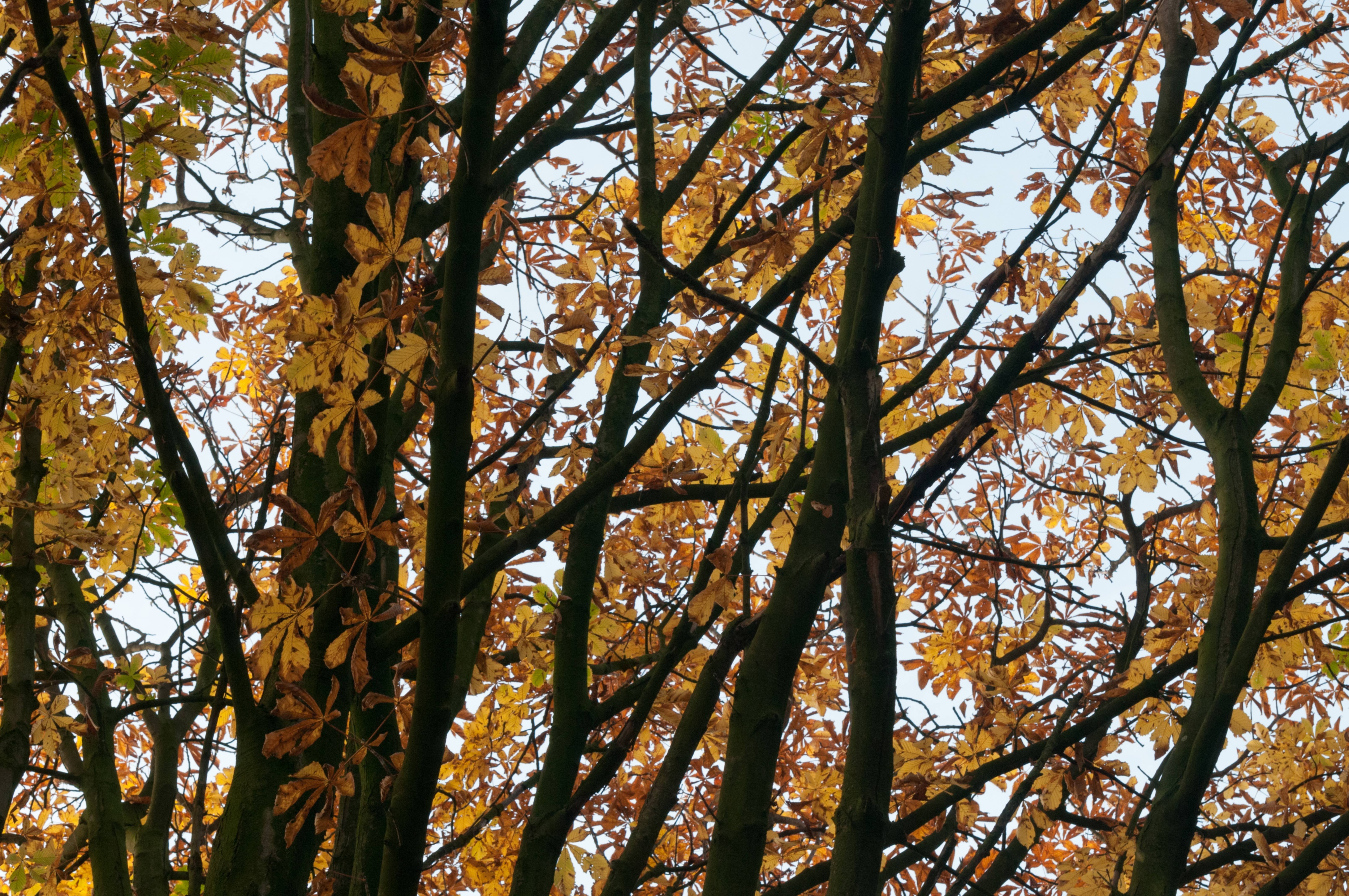 Beech Trees Branches and Leaves Pattern